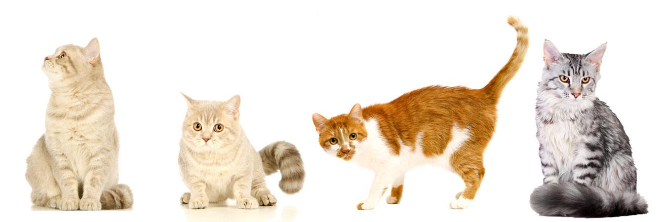 Cats-Slide